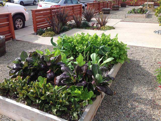 Vegetable-Herb-Gardens