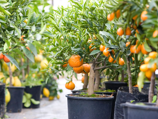 Fruit tree nursery examples
