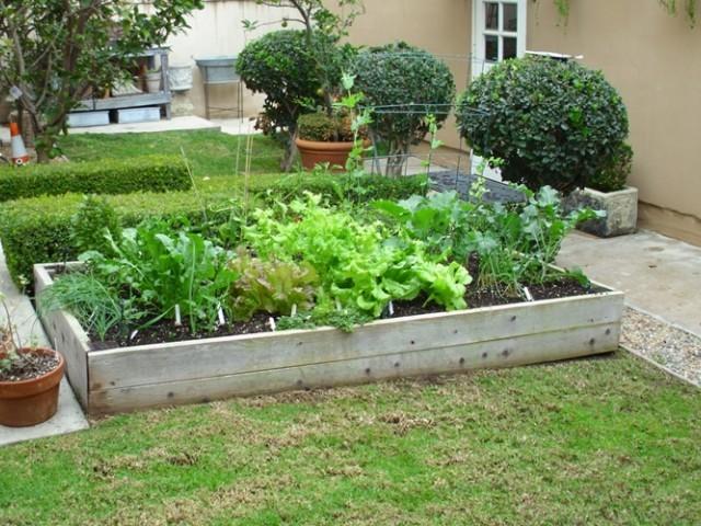 raised_bed_garden_lettuce