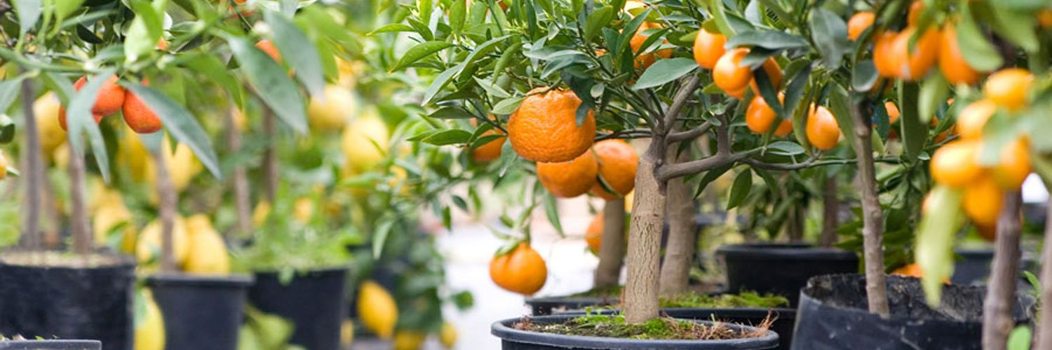 Harvest to Home features an organic fruit tree nursery
