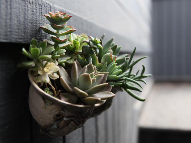 ceramic_succulent_art