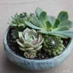 small_potted_succulents