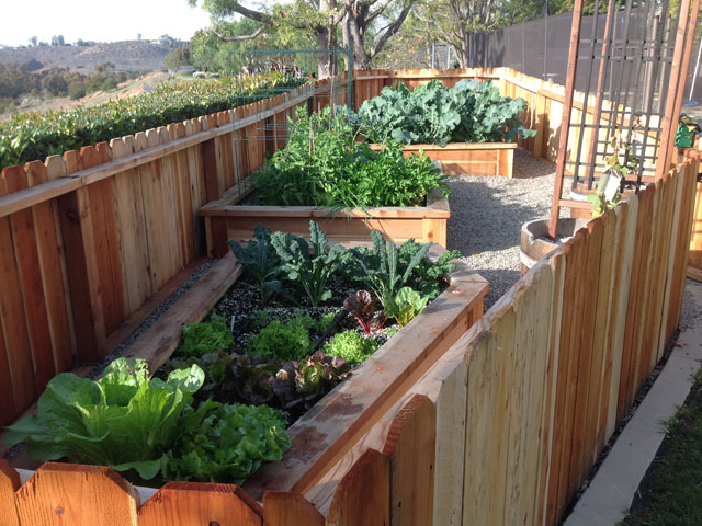 Our organic garden services offers edible gardens