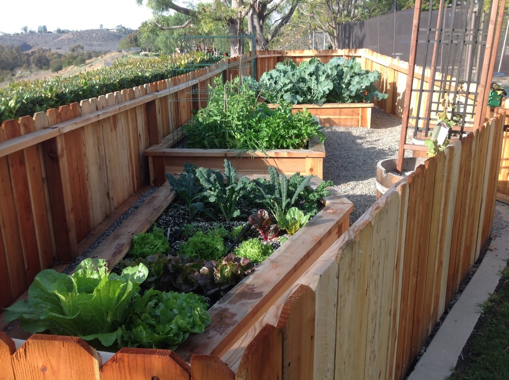 Raised bed gardens are perfect for your home