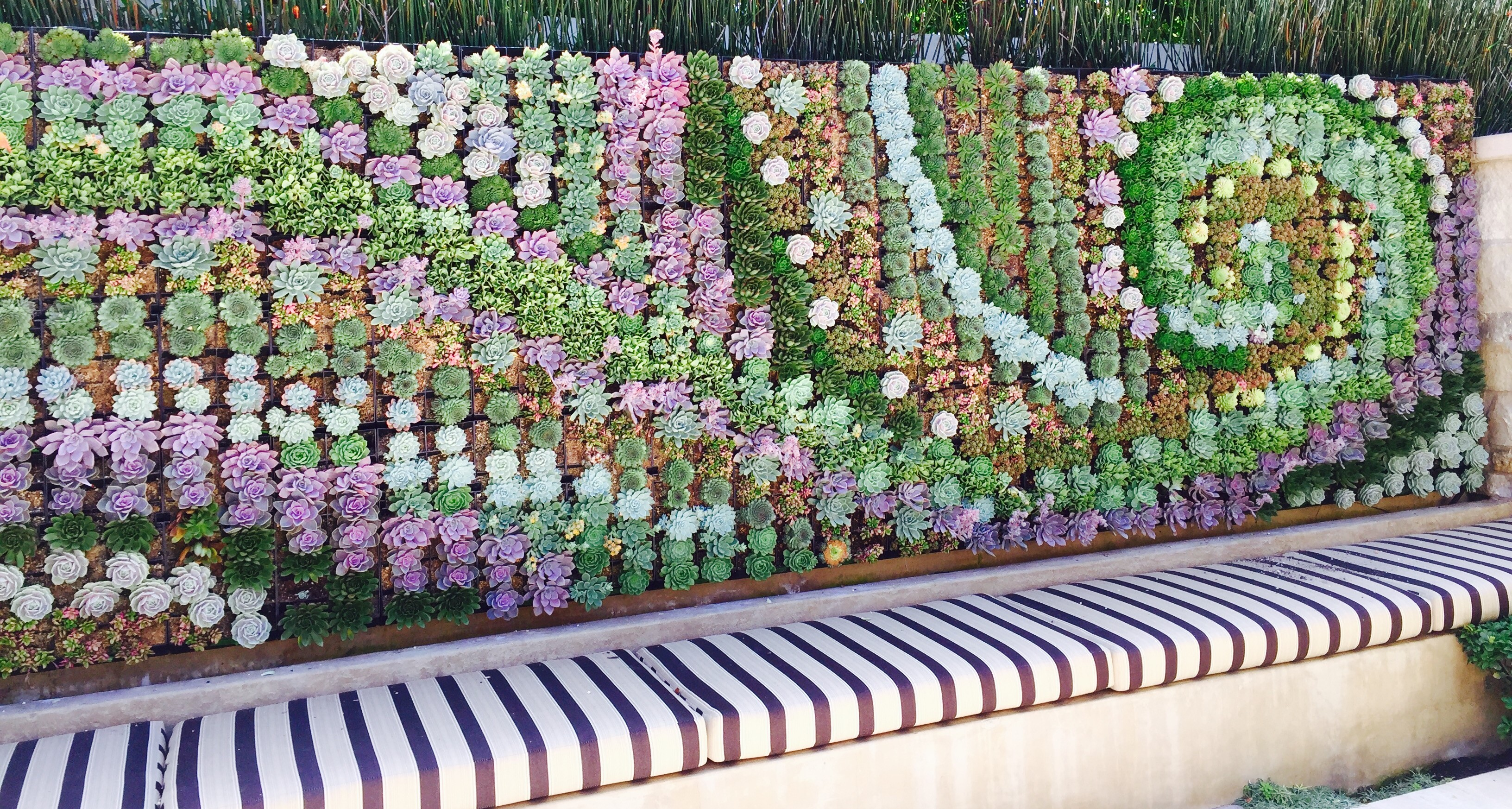 Our organic garden designers create gorgeous succulent walls
