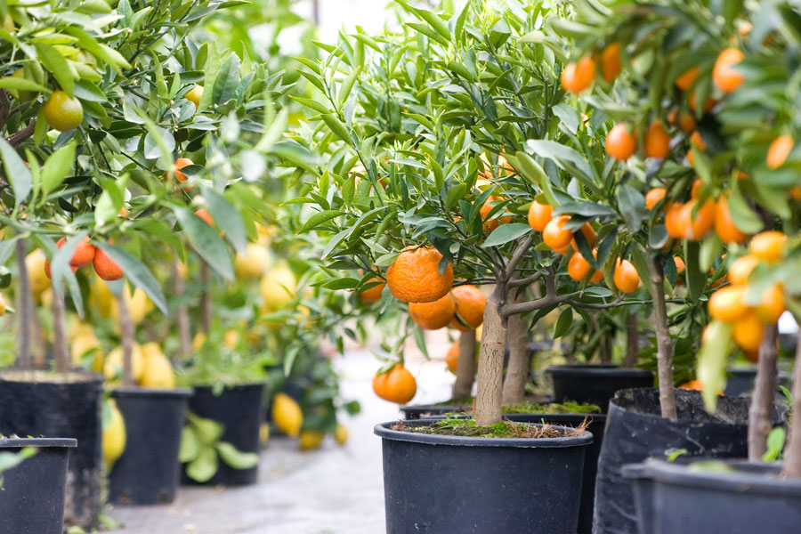 Our garden design team help you ti select the perfect fruit tree.