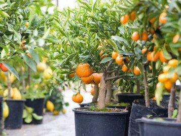 fruit_tree_service (3)